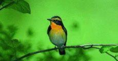 birds_028