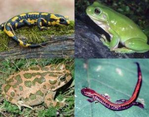 الزواحف والبرمائيات التي تعيش في الغابات المطيرة Amphibian